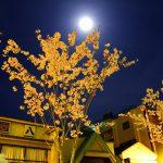 鎌倉で夜桜フォトツーリング